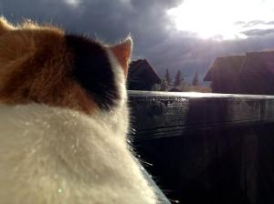 Onze kat Kwiebus baalt van de regen